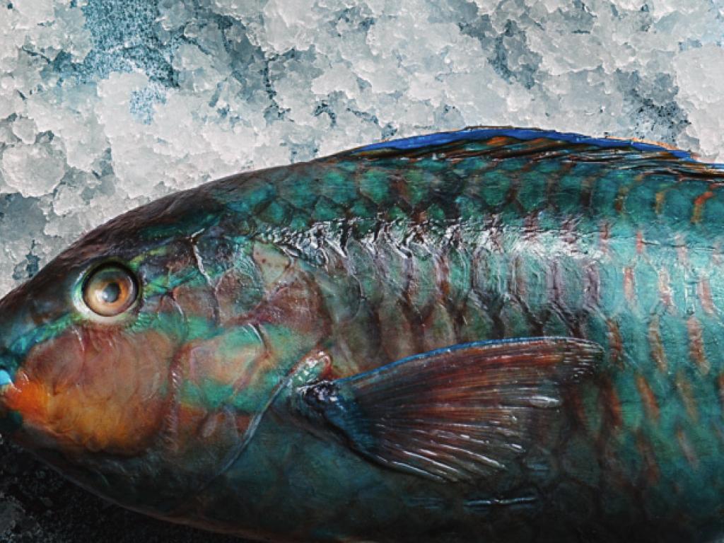 Рыба, запеченная в соли с Сардинии